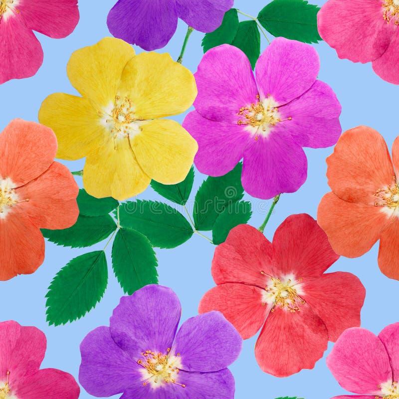 Briaren som var lös steg Sömlös modelltextur av blommor Blom- lodisar royaltyfri illustrationer