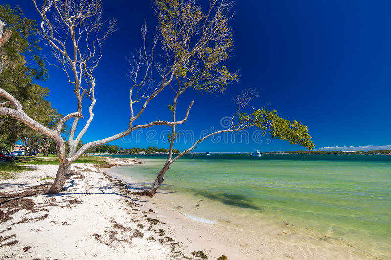 BRIBIE ISLAND, AUS - FEB 14 2016: Beach with trees on the west s. Ide of Bribie Island, Queensland, Australia royalty free stock images