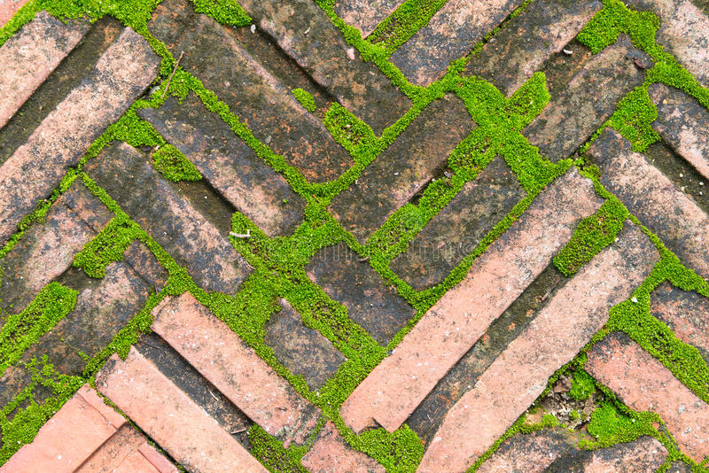 Brick on ground contain some moss. Grow up stock photography
