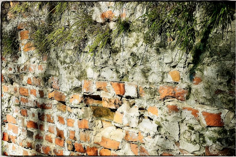 Brick and Mortar Wall with Vegetation Growing from Cracks stock images