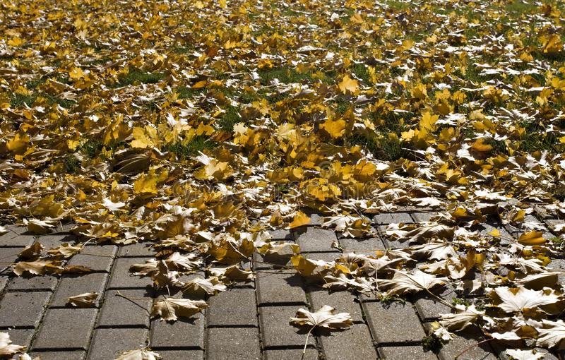 Brick Path, Grass, Autumn Leaves stock photos