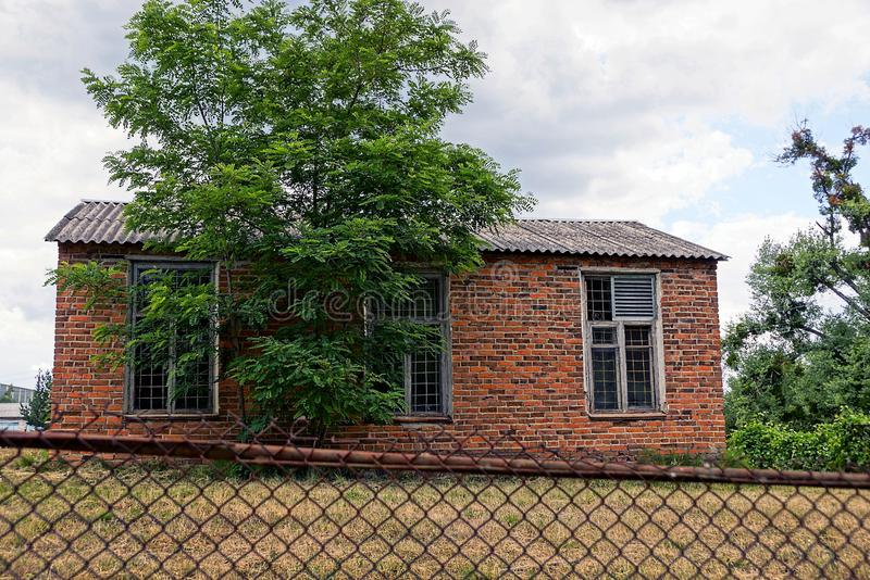 Brick rural house behind a green tree in the yard. Green tree in front of an old rural house with bars on the windows royalty free stock photography