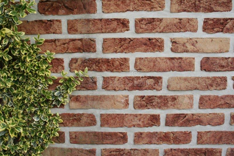 Download Brick wall stock photo. Image of stone, brick, background - 106816