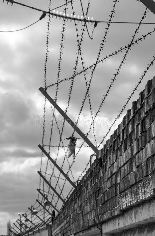 Brick wall with barbed-wire and dead bird, black and white photo. Brick wall with barbed-wire and dead bird - black and white photo royalty free stock photo