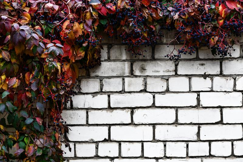 Brick wall with decorative grapes abstract background royalty free stock image