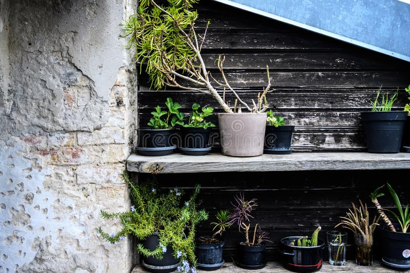 Makeshift garden in a collection of pots royalty free stock photo