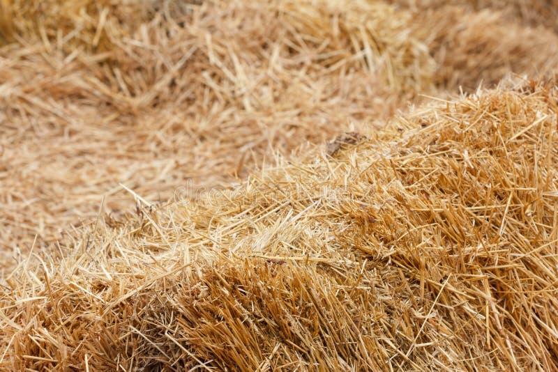 Bricks of fresh hay stock image