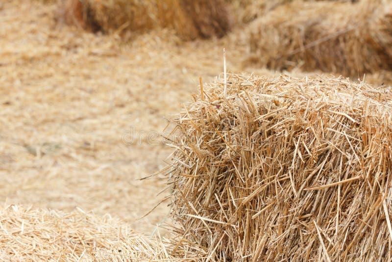 Bricks of fresh hay royalty free stock images