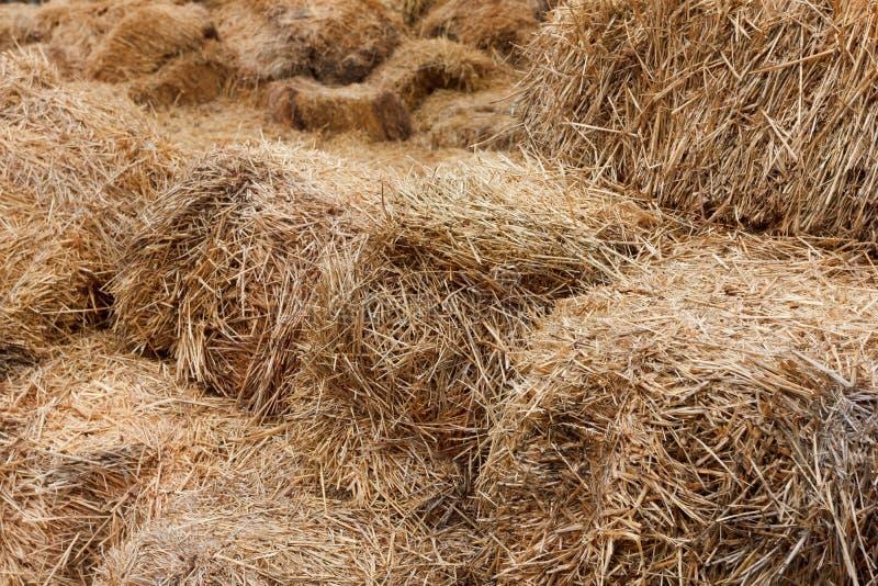 Bricks of fresh hay royalty free stock photo