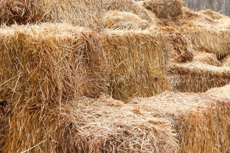 Bricks of fresh hay stock photography