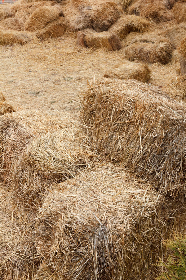Bricks of fresh hay stock photos