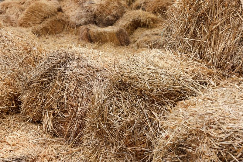Bricks of fresh hay. On a manege for horse dressage stock image