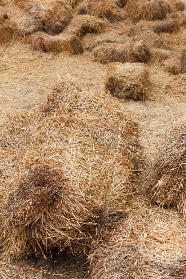 Bricks of fresh hay. On a manege for horse dressage Crop for livestock stock photography