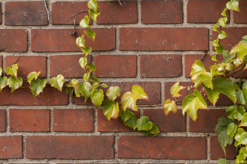 Brickwall überwältigt stockbilder