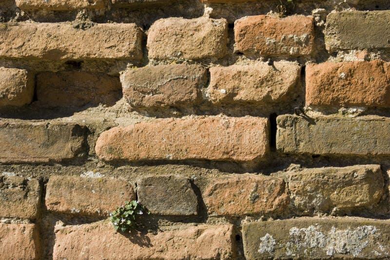 Download Brickwall immagine stock. Immagine di costruito, solido - 16231137