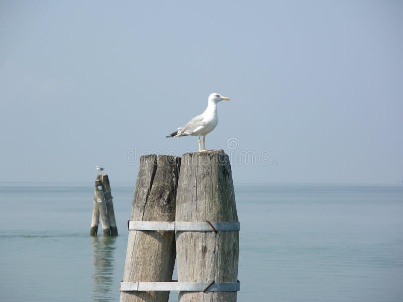 bricola seagul στοκ φωτογραφία με δικαίωμα ελεύθερης χρήσης