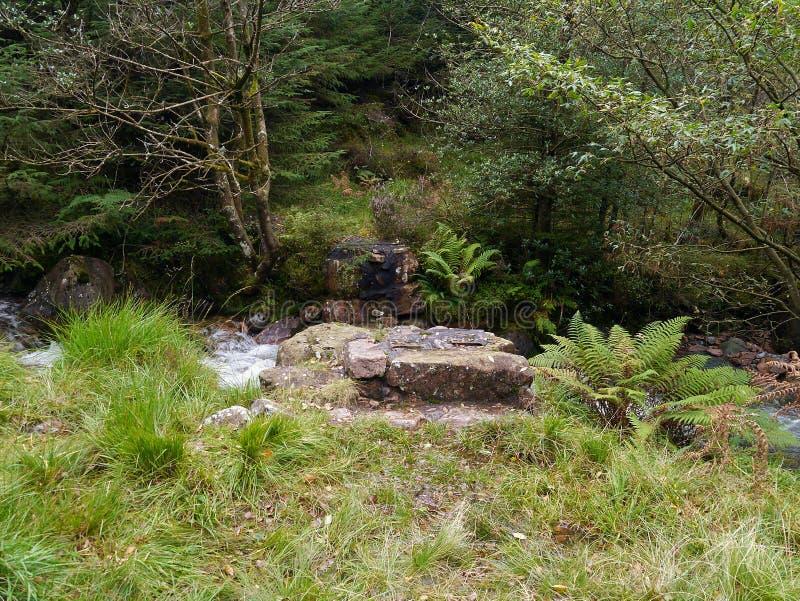 Bridżowi cokoły w lesie bez mostu zdjęcia stock