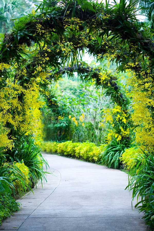 Bridal arch footpath in a botanical garden stock photo
