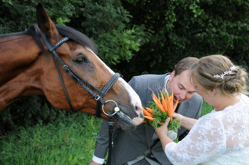 Bridal bouquet for the horse. Newlyweds feeding their horse with a bridal bouquet with carrots. The groom shows the horse how to eat the carrots stock photo