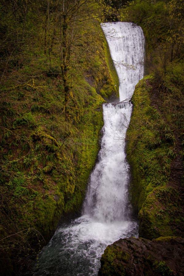 Bridal Vail понижается в ущелье Рекы Колумбия, Орегон стоковые фотографии rf