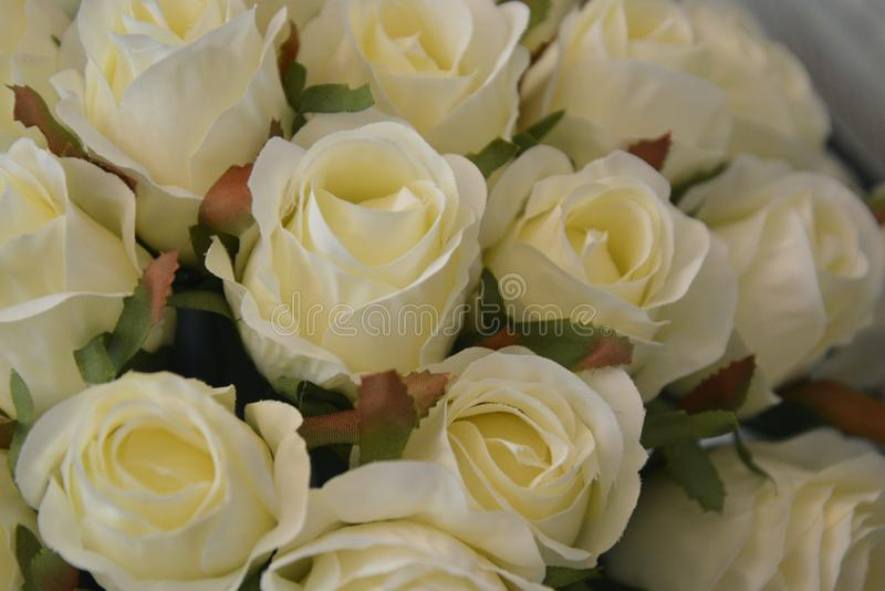 Bridal, wedding white roses bouquet. Beautiful flowers royalty free stock photography