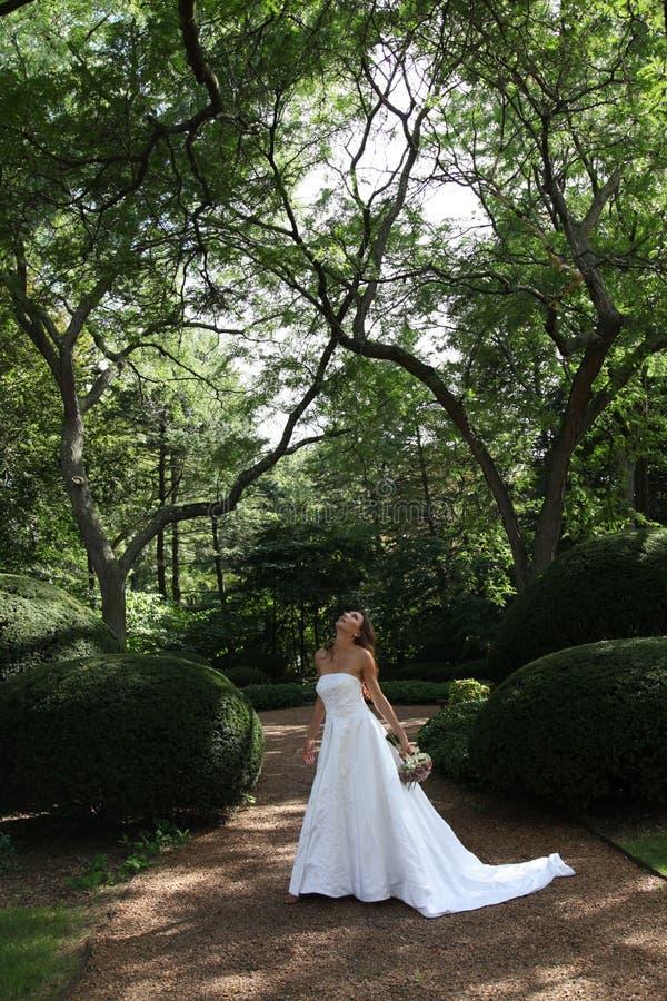 Download Bride stock photo. Image of caucasian, white, wedding - 20931884