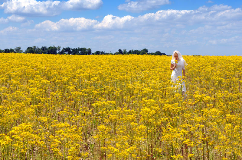 Bride in a Field of Flowers. Bride in a field of yellow flowers during sunny day royalty free stock image