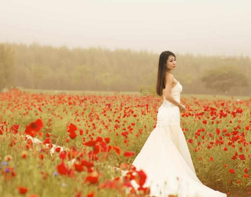 Bride in field of poppies royalty free stock image