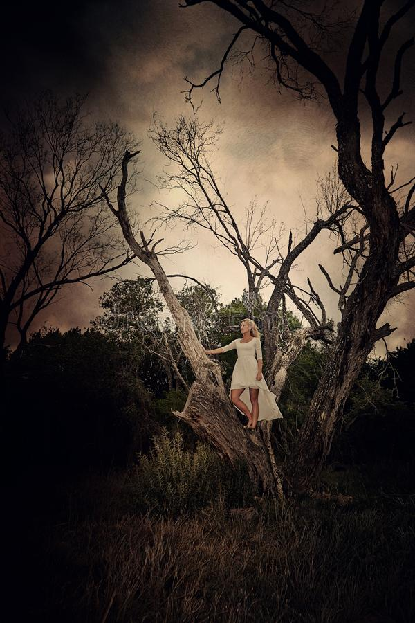 Bride. Girl tree bride moody drama stock photography