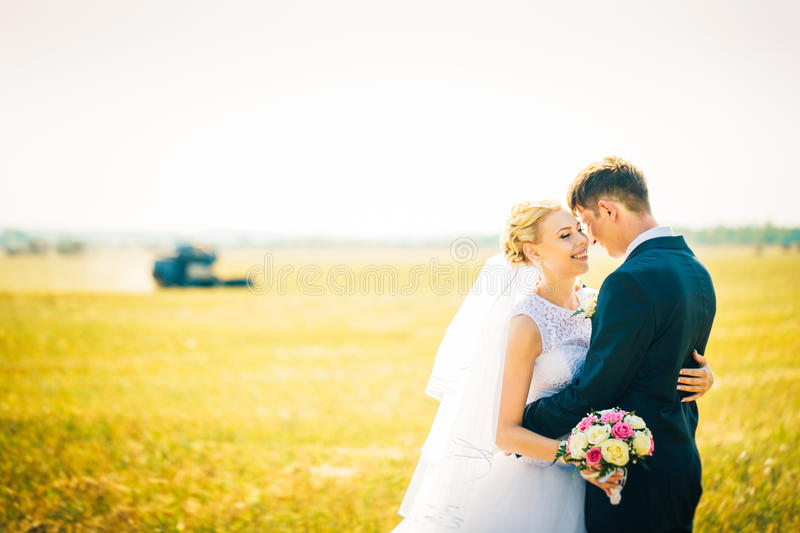 The bride and groom on the background of field stock image