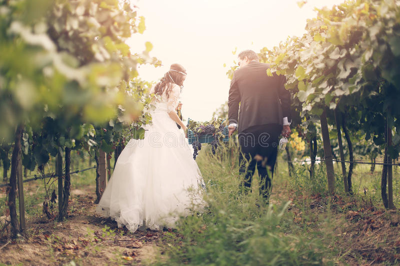 Bride and groom in the grapevines stock image