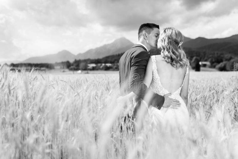 Bride and groom kissing and hugging tenderly in wheat field somewhere in Slovenian countryside. royalty free stock photos