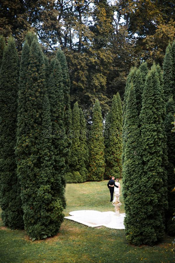 Bride and groom walk around the trees. Young family, the wedding, the newlyweds.  royalty free stock photo