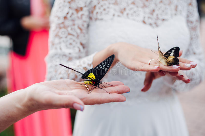 bride is holding a butterfly in hands royalty free stock photos