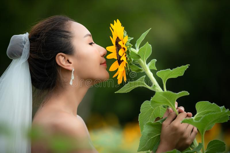 Bride holds a wedding bouquet. Bride wedding white dress with sunflower in the garden. Nature Background stock photography