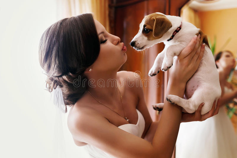 Bride kisses a puppy holding it in her hands stock photos