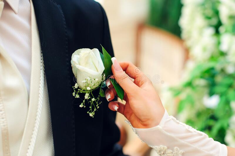 Bride puts a boutonniere on the groom`s jacket. Bride`s hand, wedding manicure, white rose. Wedding day concept royalty free stock photography
