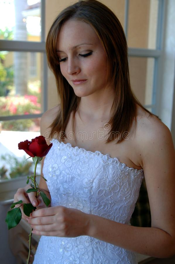 Bride with rose stock photography