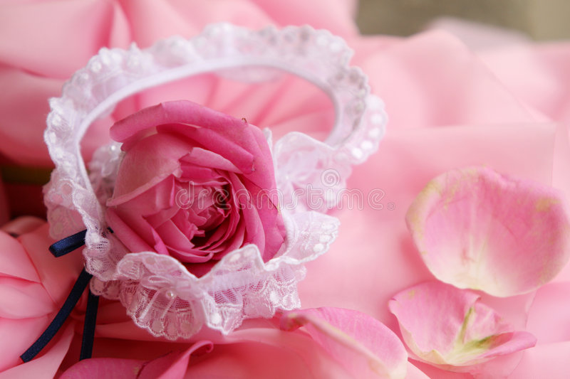 Bride's garter and rose-leaf stock photography