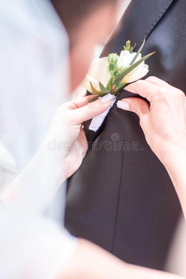The bride`s hand puts on a boutonniere flower on the groom`s jacket. Bride puts a buttonhole on a grooms suit. close-up.  royalty free stock photo