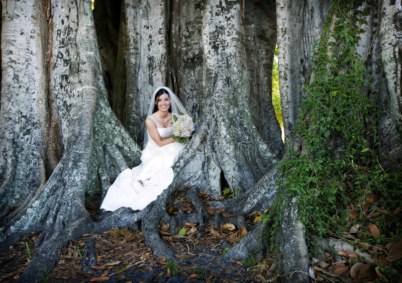 Download Bride sitting under tree stock image. Image of colorful - 15765343