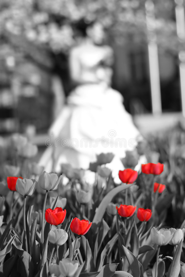 Bride tulips. Bride standing next to tree holding flowers with red tulips in foreground stock image
