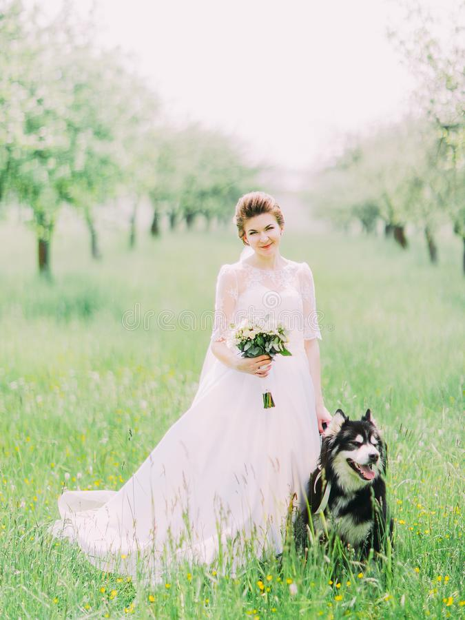The bride with the wedding bouquet is standing near the dog in the sunny field. stock images