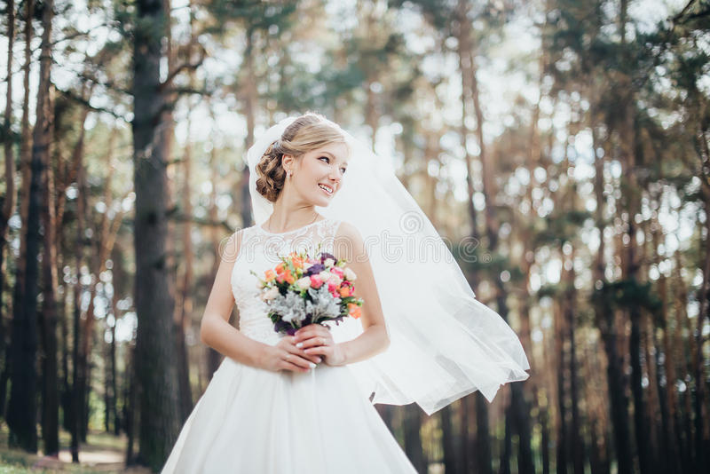 The bride in a white dress royalty free stock images
