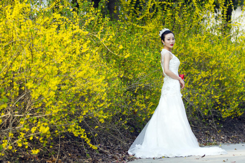 A bride with white wedding dress stand by golden jasmine flowers download a bride with white wedding dress stand by golden jasmine flowers stock photo image mightylinksfo
