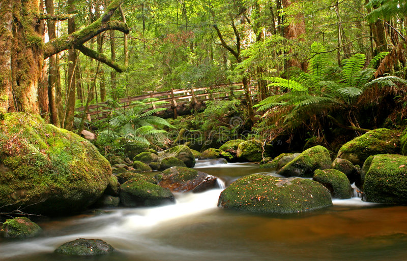 The Bridge. Natural bridge over river in mossy temperate rainforest, Victoria, Australia stock image