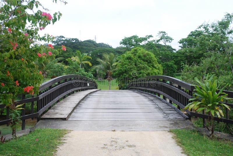 Download Bridge stock photo. Image of wood, path, vegetation, vanuatu - 13518528