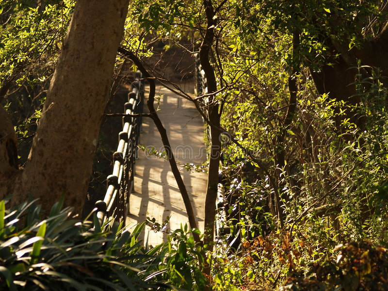 Bridge. I captured this picture at The Walter Sisulu Botanical Gardens outside Krugersdorp, South Africa royalty free stock photography