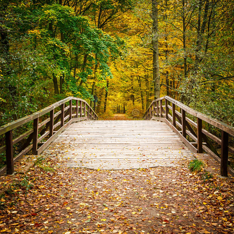 Bridge in autumn forest. Wooden bridge in the autumn forest royalty free stock images