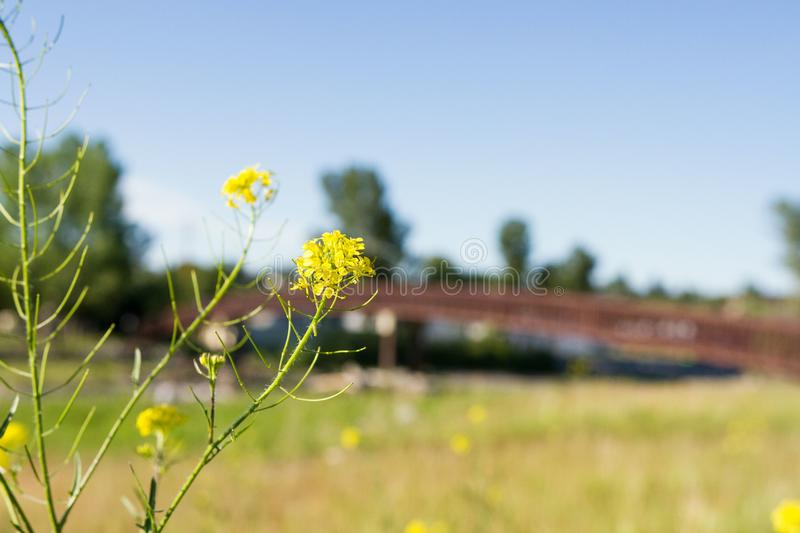 Bridge in the background of flowers royalty free stock photo